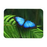 butterfly rectangular magnet
