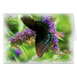 butterfly_red_spotted_purple_0233_Paint Greeting Card