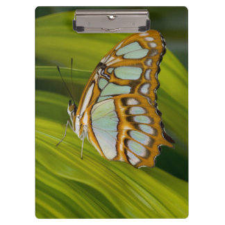 Butterfly resting on leaf clipboard