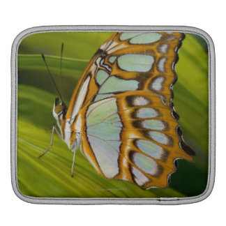 Butterfly resting on leaf iPad sleeve