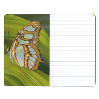 Butterfly resting on leaf journals