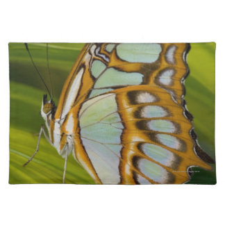 Butterfly resting on leaf placemat