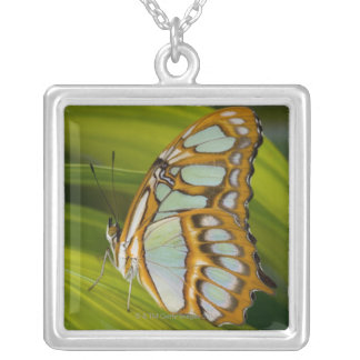Butterfly resting on leaf silver plated necklace
