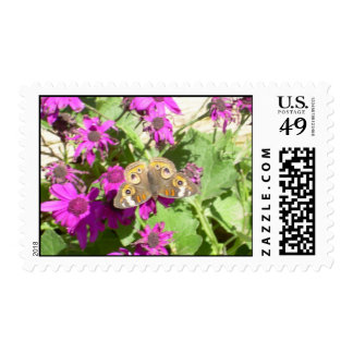 Butterfly Resting on Petals Postage
