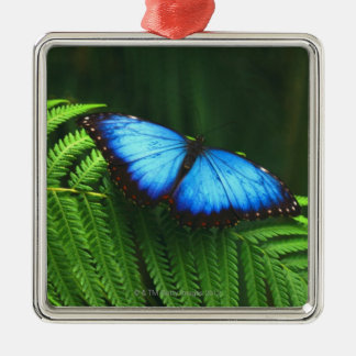 butterfly Silver-Colored square decoration