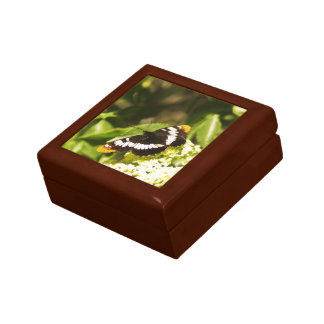 Butterfly Small Square Gift Box