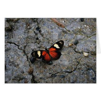 Butterfly Solitaire on Stone Note Card