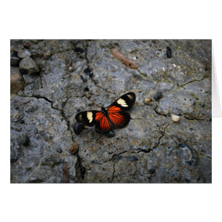 Butterfly Solitaire on Stone Greeting Card