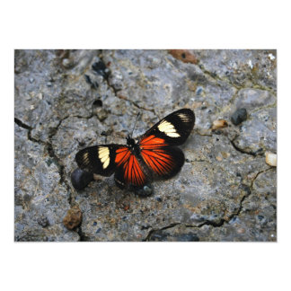 "Butterfly Solitaire on Stone 5.5"" X 7.5"" Invitation Card"