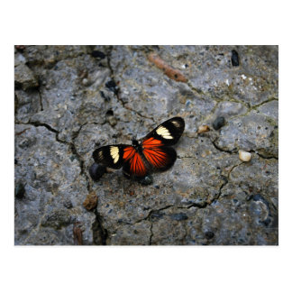 Butterfly Solitaire on Stone Postcard