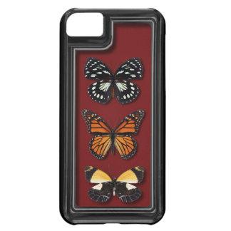 Butterfly specimen case