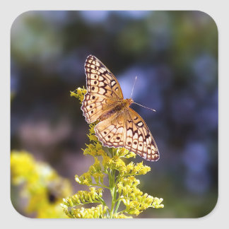 Butterfly Square Sticker