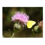BUTTERFLY & THISTLE POSTCARD
