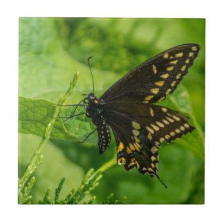 Butterfly Ceramic Tile