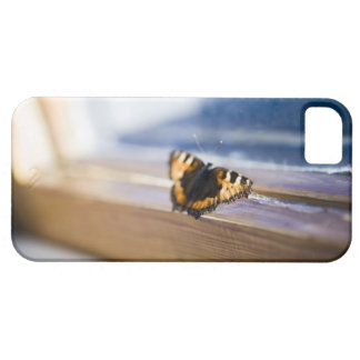 Butterfly trying to get out, Sweden. Barely There iPhone 5 Case