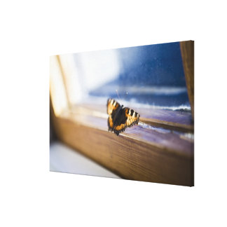 Butterfly trying to get out, Sweden. Canvas Print