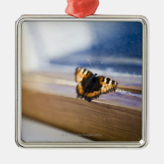 Butterfly trying to get out, Sweden. Christmas Ornament