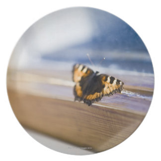 Butterfly trying to get out, Sweden. Plates