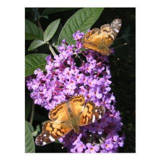 Butterfly Twins ~ postcard