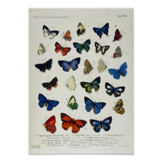 Butterfly Educational Poster