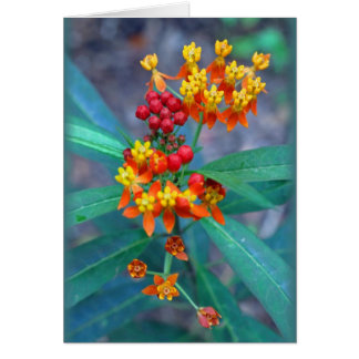 """""""Butterfly weed"""" Card"""