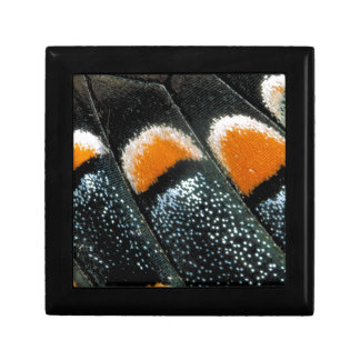 Butterfly Wing Trinket Boxes