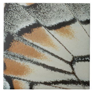 Butterfly Wing Large Square Tile