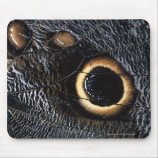 butterfly wing mouse mats