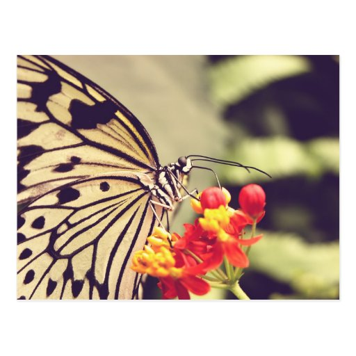 Butterfly With Red and Yellow Flowers Postcard