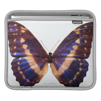 Butterfly with wings spread 3 iPad sleeve