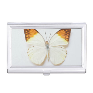 Butterfly with wingspread, found in regions of Asi Business Card Holder