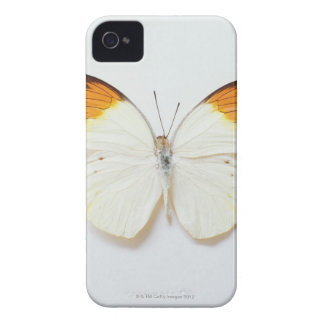 Butterfly with wingspread, found in regions of Asi iPhone 4 Case-Mate Cases