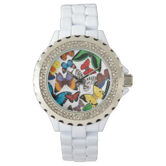 Butterfly World Watch