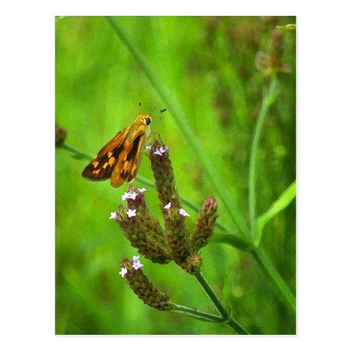 Butterfy on Verbena Postcard