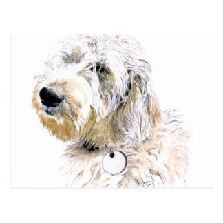 Butters the Labradoodle Postcard