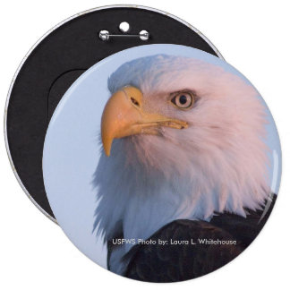 Button / Bald Eagle