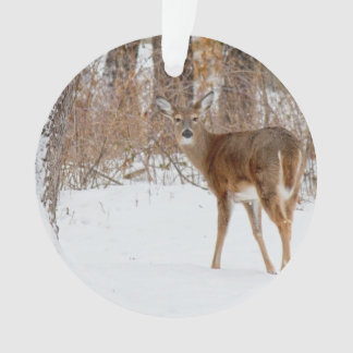 Button Buck Deer in Winter White Snowy Field