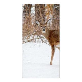 Button Buck Deer in Winter White Snowy Field Picture Card