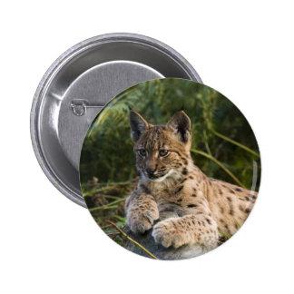 Button - lynx