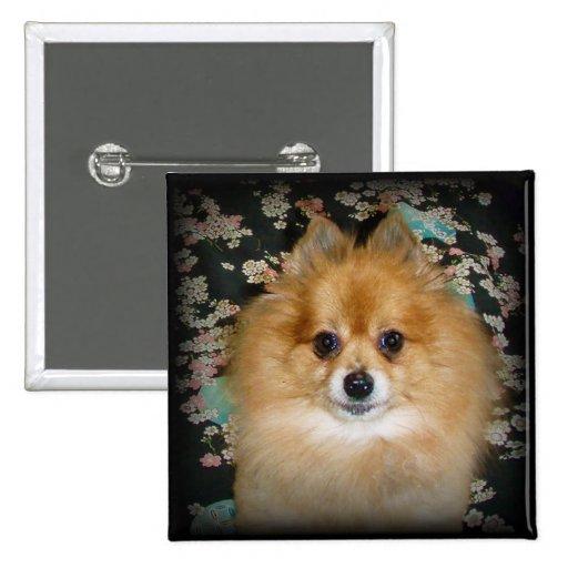 Button | Pomeranian dog Marley Pinback Button