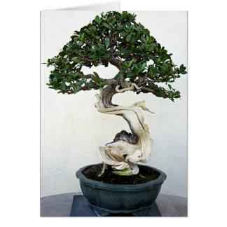 Buttonwood Bonsai Tree Greeting Cards