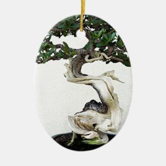 Buttonwood Bonsai Tree Ceramic Oval Decoration