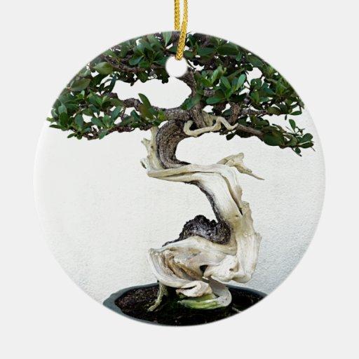 Buttonwood Bonsai Tree Christmas Tree Ornament