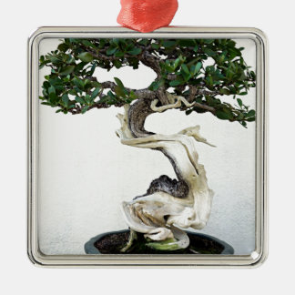 Buttonwood Bonsai Tree Silver-Colored Square Decoration