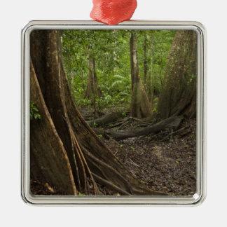 Buttress Roots. Rainforest, Mapari Rupununi, 2 Christmas Ornament