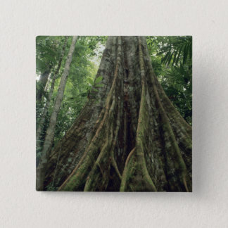 Buttressed tree in rainforest, Corcovado 15 Cm Square Badge