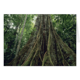 Buttressed tree in rainforest, Corcovado Card