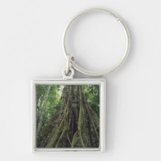 Buttressed tree in rainforest, Corcovado Key Ring