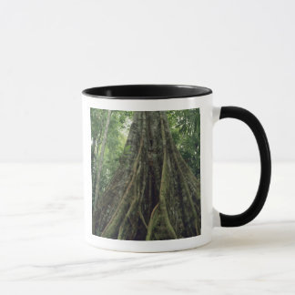 Buttressed tree in rainforest, Corcovado Mug