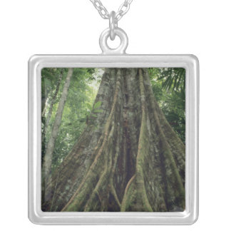 Buttressed tree in rainforest, Corcovado Silver Plated Necklace